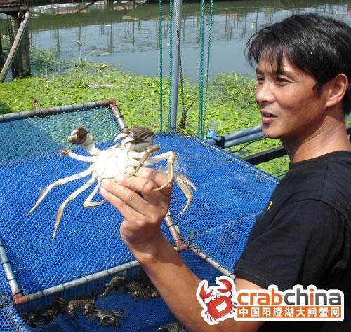 好大一只蟹