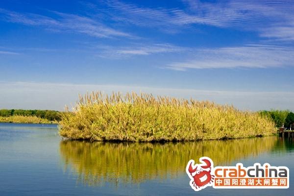 沙家浜芦荡湿地占地998亩,总投资共一亿元,围绕凸出湿地的典型特征,着力打造亚热带地区的典型湿地园区。通过选择芦苇、芦竹、蒲苇、朴树、女贞等当地典型的湿地植物与耐水湿植物,营造具有江南水乡特征的湿地植物群落。通过河道调整,形成凹凸程度丰富的湿地水岸线,增加岛屿破碎度,生成理想的湿地空间形态。通过土方改造,形成水下坡地,营造出适宜各类湿地植物生长的浅水区域。通过还原常熟典型的古镇村落,为游客展现原汁原味的传统江南水乡渔民特有的生产、生活状况与民风民俗。通过设置丰富多样的参与性活动,吸引游人特别是年轻人的参