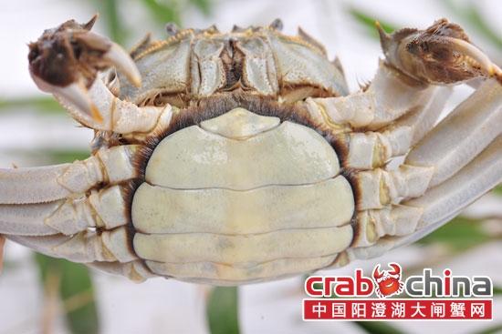 初秋食蟹正当时:六类螃蟹美味v螃蟹毛绒绒的做法肉松图片