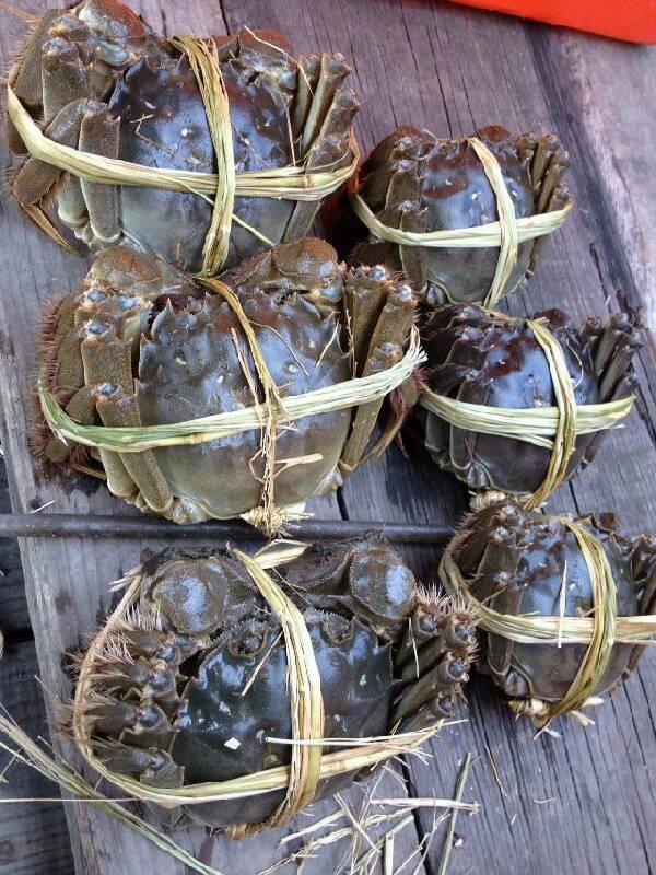 草绳绑的大闸蟹