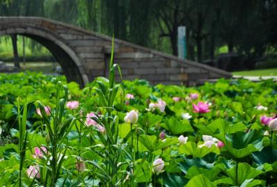 苏州莲池湖 (30)