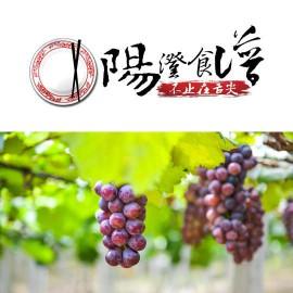 【阳澄食谱】巴城的葡萄熟了,采摘走起!