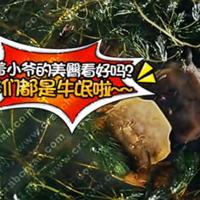 趣味非常的阳澄湖大闸蟹脱壳视频