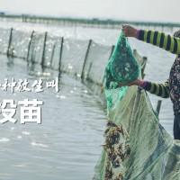 有一种放生叫投苗 阳澄湖大闸蟹投苗全纪录