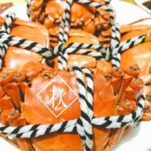 秋分至,昼夜均而寒暑平~ 托朋友的福,秋分的夜里吃了两只新鲜肥美的阳澄湖大闸蟹 放下手头的事情,坦荡荡慢悠悠地吃一只螃蟹才是最正经迎接秋天的仪式呀