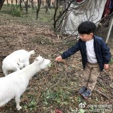 阳澄湖边喂羊 