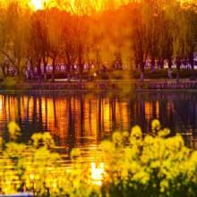 今天的阳澄湖半岛