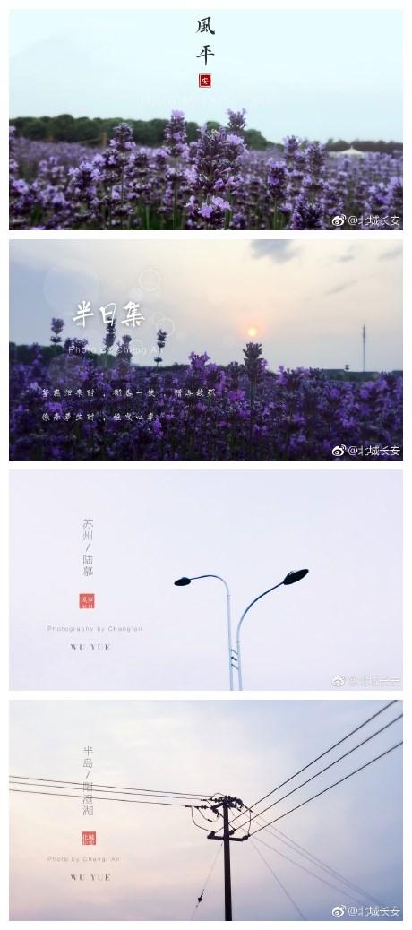 ...地想再发个图 2017年5月31日 苏州 阳澄湖半岛薰衣草庄园图片 84861 460x1038