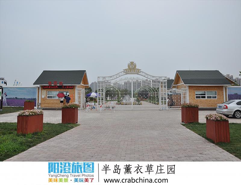 阳澄湖半岛薰衣草园