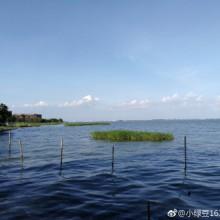 有点大海即视感的阳澄湖,最好的时光不过是和家人一起看花看草看蓝天看