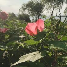 天气很美丽,阳澄湖边上走走很惬意,再也不想做宅在家里的咸鱼了[拜拜]