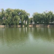 苏州阳澄湖
