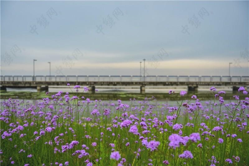阳澄湖雨季景色