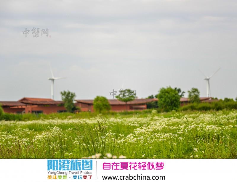 阳澄湖赏花旅游