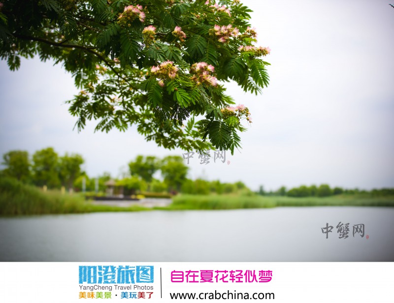 阳澄湖湿地公园夏花