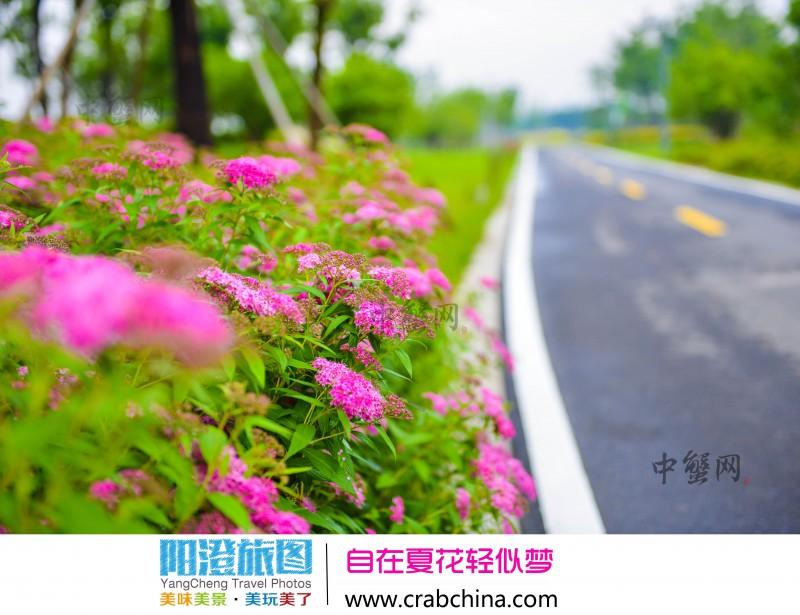阳澄湖半岛骑行游玩