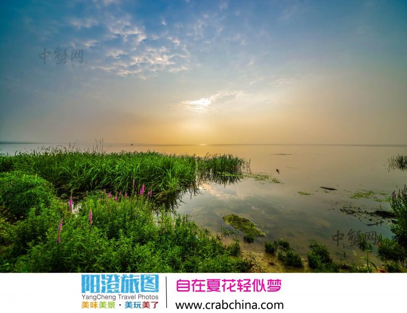 阳澄湖夏日赏花