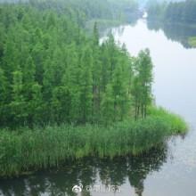 【在阳澄湖绿色慢行空间 深氧骑行[爱你] 】阳澄湖东部慢行系统位于苏州通澄路以西、阳澄湖以东,高铁两侧。经过两年的精心打造,现已打造成集湿地景观和运动休闲于一体的绿色慢行公共空间。[太开心] 林允瘦1