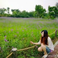 #苏州##阳澄湖##薰衣草[超话]#在青丘,邂逅薰衣草……