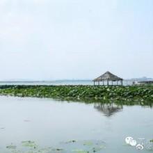 #苏州初夏#【莲花岛】这是一座因阳澄湖大闸蟹而越来越热闹的小岛。现在不是吃大闸蟹的季节,少了人来人往的尝鲜人,清新自然的环境反而美得更加纯粹。大片的水,大片的绿,连天空都比你平日所见的似乎更蓝,你可以