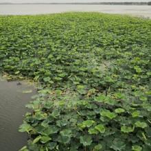苏州阳澄湖半岛旅游区,有吃有喝,还有风景,可以看到大湖,心胸为之一阔。 
