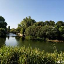 阳澄湖的夏天 