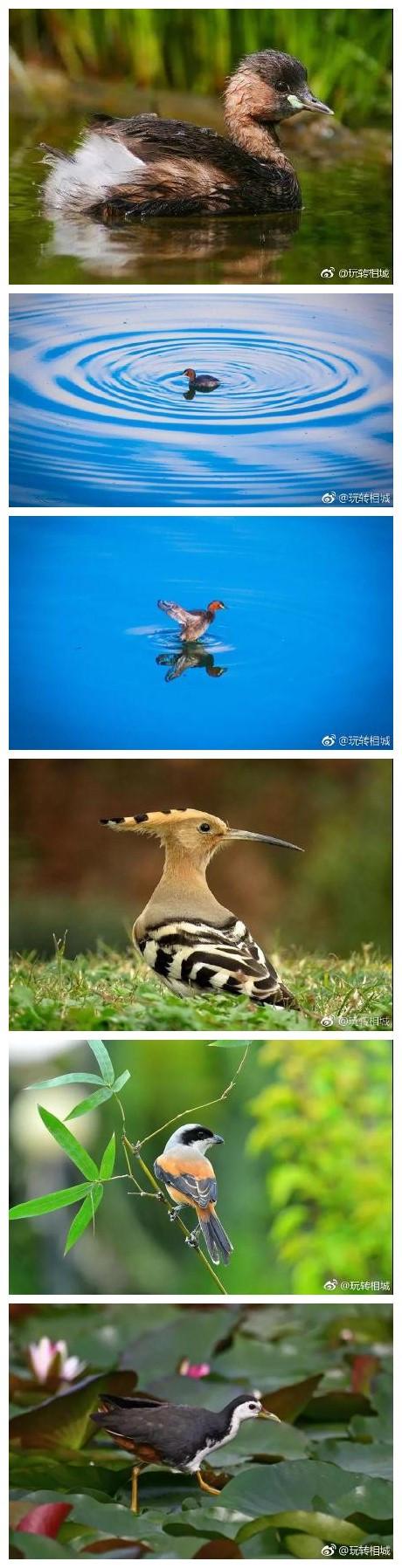 """""""一切鸟语皆情语"""",阳澄湖畔出现了一群情话boy。"""