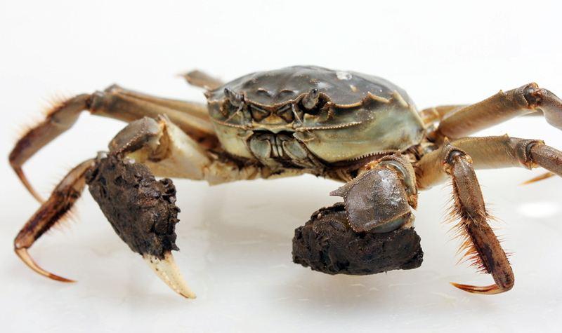 假冒阳澄湖大闸蟹
