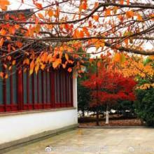 阳澄湖半岛之重元寺(Photo by @太阳上的蚊子 ) 