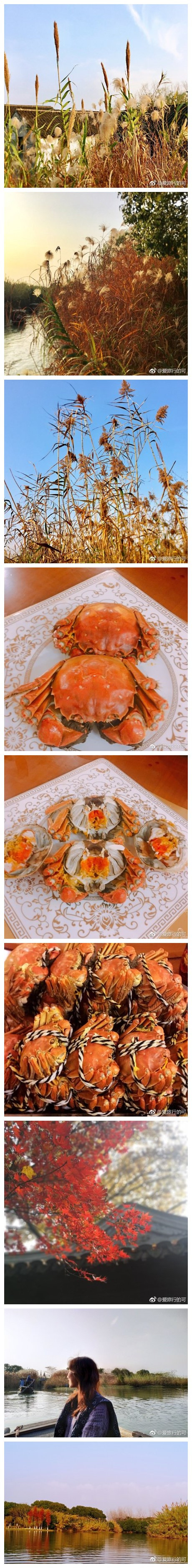 最最最正宗的大闸蟹 眼看着从阳澄湖里捞出来 张牙舞爪 今天是个连吃三只的乡土小妹 