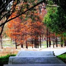 莲池湖--阳澄湖半岛的一个公园,别有一番情趣 
