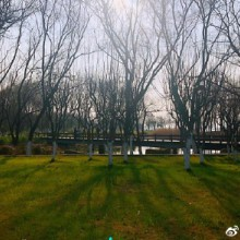 阳澄湖岸边的青草地、盛开的梅花、休闲的人们,湖里泛舟的渔人,构成了一幅美好闲适的生活图景。想一想,没几年前,这里也不过是湖边的村落、荒草地、滩涂吧。中国的农村,改变得如此快速而彻底。