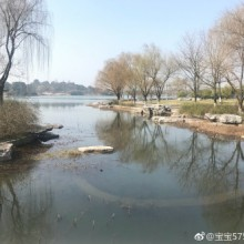 苏州阳澄湖早春,鸳鸯戏水,喜鹊报喜。 