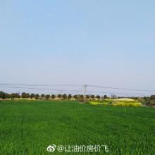阳澄湖Ⅰ莲花岛