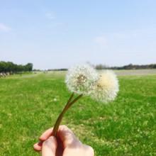 """第一次到阳澄湖半岛度假区 期待了一周的赏花 赶上了最为""""怒放""""的花期"""
